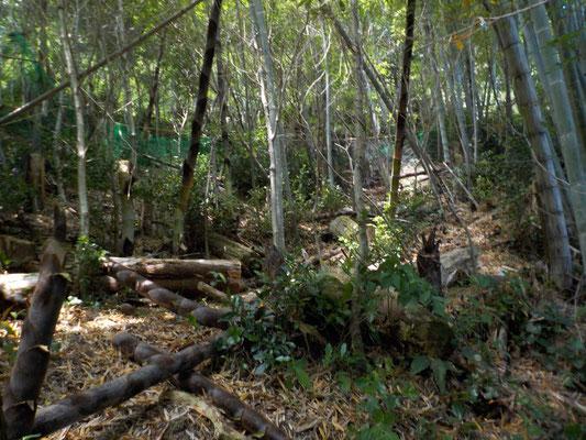 古い竹を数本切り倒し、若竹を同じ数だけ残します。