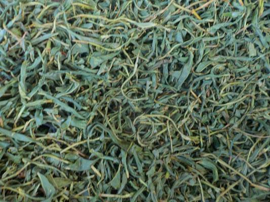 萎れた茶葉を蒸さないで、一時間ほど揉みます。