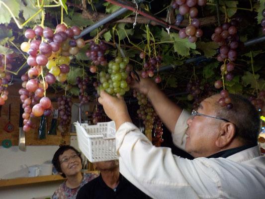 葡萄を取る順番はジャンケンで、、、、。
