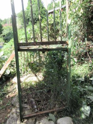 草むらを刈りこんで、、、、箱罠の中は自然に生えた竹、、、いい感じ。
