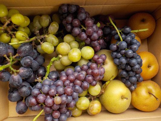 ご主人によれば、今年は桃と梨は不作、、、とか。