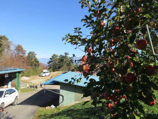 下條村の「かのこさん家」リンゴ農家へ五人で出かけました。