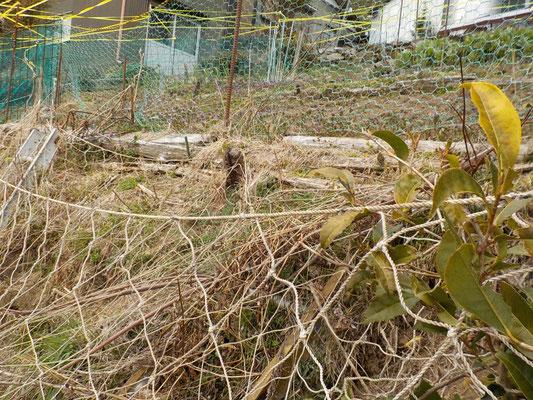 海苔の養殖で使われる網は強さ抜群。