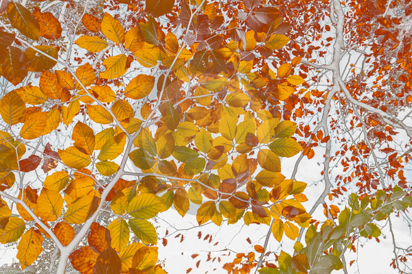 """leaves"" - ART edition - size L - picture ID 229607-2"