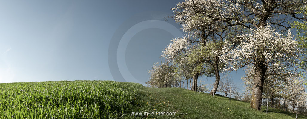 """trees scharten"" - size XL - picture ID 225111"