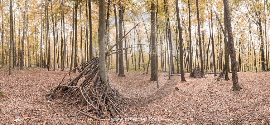 """wood in the forest VII"" - linz - size XL - picture ID 223626"