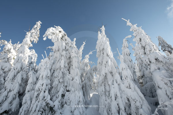 """""""trees suffering from snow"""" - muehlviertel nordwaldkamm - ART edition - size L - picture ID 218003"""