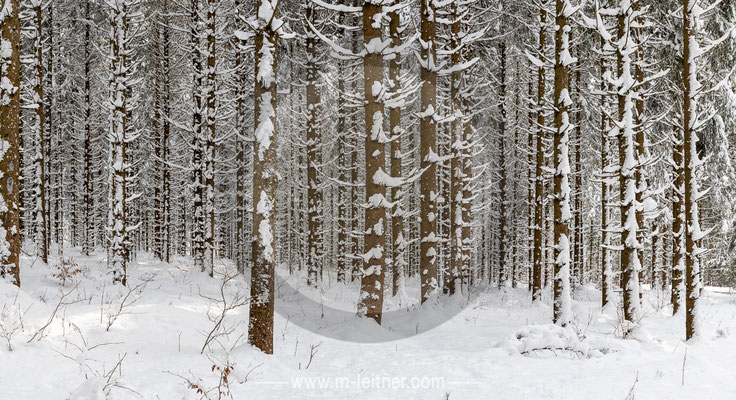 """forest winter"" - almtal - size XXL - picture ID 221476"