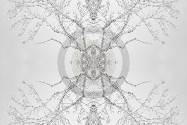 """winter tree"" - kaleidoscope - ART edition - Size XL - picture ID K217615"