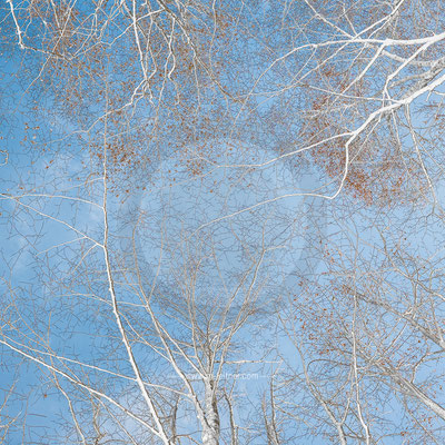 """network"" - trees - ART edition - size M - picture ID 229623-1"