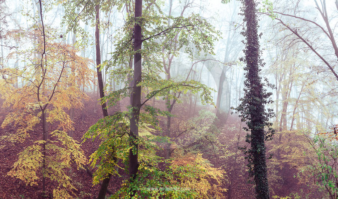 """""""forest"""" - reinberg wels - size XXL (19133 x 11296 pixel) - picture ID 102969 tone LBR"""