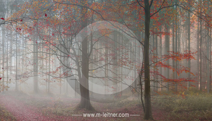 autumn trees - picture ID 102708 ART-XL