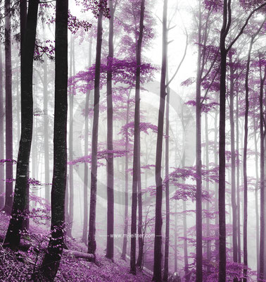 mystic forest - picture ID 102701-purple  ART-XL