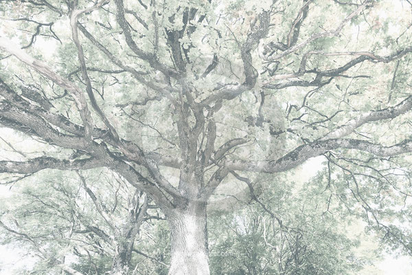 """""""tree"""" - steinbach attersee austria - ART edition - size L (6000 x 4000 pixel) - picture ID 215419-2"""