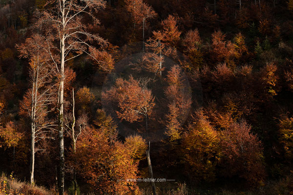 """trees"" - brunnental phyrn-priel - ART editon - size XL - picture ID 229384"