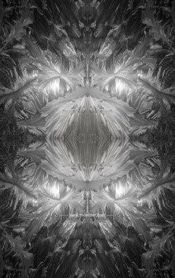 """eisblume"" - ART edition - size XL - picture ID K207567 b&w"