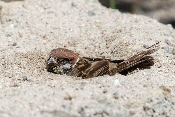 Eingegraben und «paniert»
