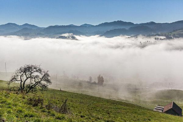 Blick von Schindlet über das Nebelmeer über dem Tösstal.