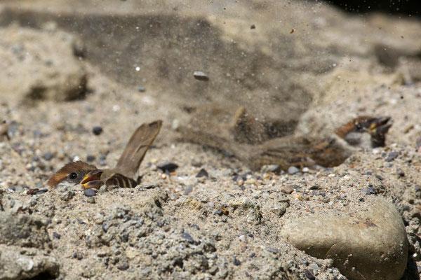Manchmal werden sichtbar Sand und Steinchen hochgeschleudert