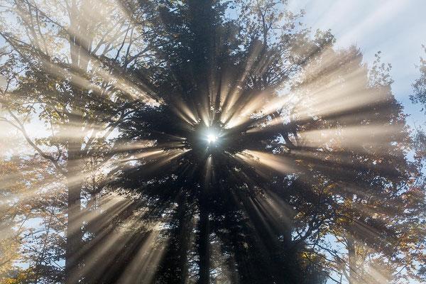 Sonnenstrahlen durchdringen selbst dichtes Geäst.