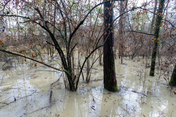 Stunden später wird der Wasserstand wieder sinken.