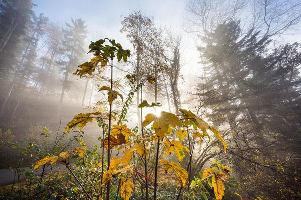 Nebel, Sonne, Herbstfarben.