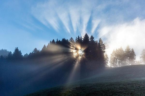 Fichten werfen ihre Schatten auf die Nebelobergrenze.