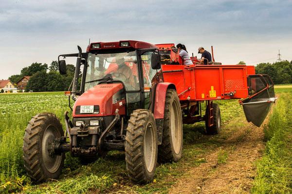 Der Traktor zieht den Kartoffelroder