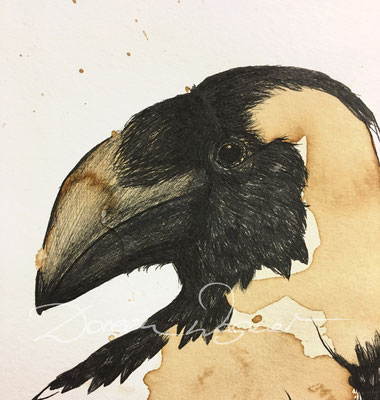 'raven' coffee ink, mixed media on paper. 15,5x22cm