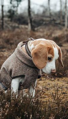 Hundehalsband FLASH ME (Breite 2,5cm) - Fettleder in Dunkelbraun, Nappaleder in Hellgrün, Naht in Hellgrün, SWAROVSKI ® Steine in Chrysolite, Beschläge in Silber