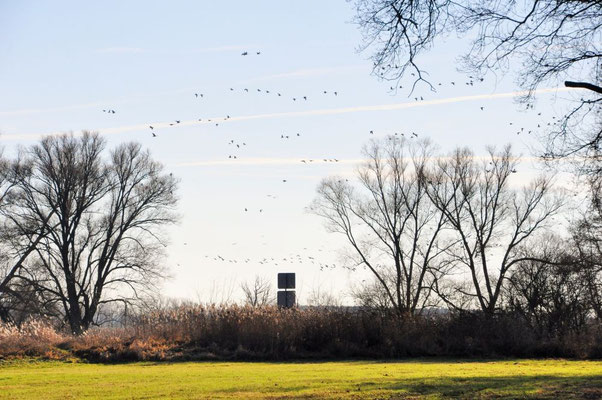 Garz - Zugvögel