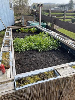 21.04.2021 endlich kann bepflanzt werden, wobei der Ruccola ist noch vom letzten Jahr