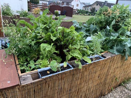 üppiger Bewuchs 02.07.2020 den großen Regen von gestern hat das Beet und die Pflanzen ganz gut überstanden
