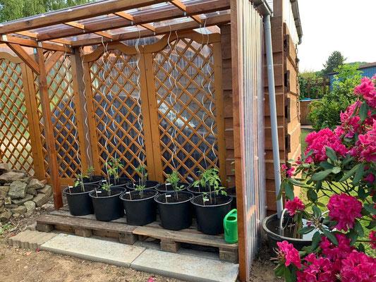 26. Mai von der Seite kam doch noch Regen auf die Pflanzen, jetzt nicht mehr :-)