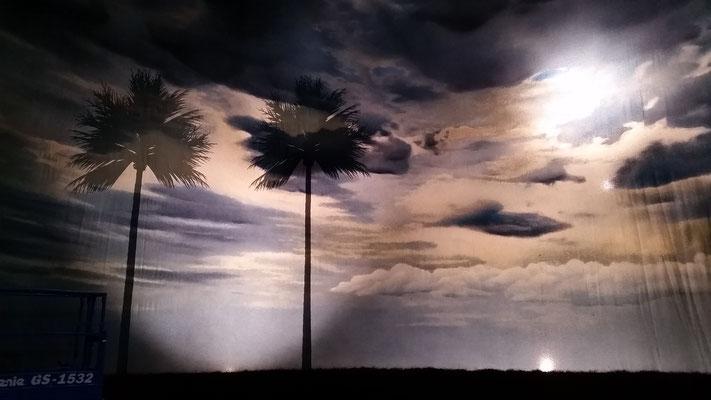 durchleuchtbarer Rundhorizont mit Palmen auf der Rückseite | translucent backdrop with painted palms on the back side