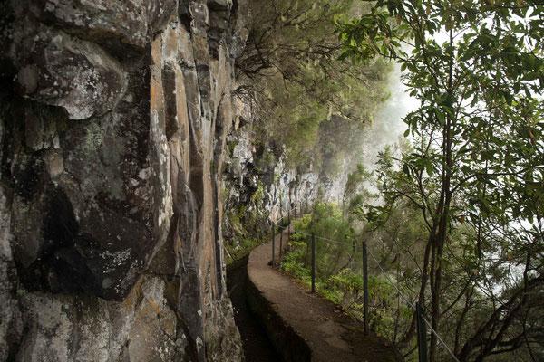 Erstaunlich das es entlang der Levado Caldeirao Verde trotz der senkrecht abfallenden Wand noch so viel Pflanzen hat.