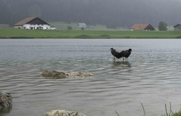 Wandern bei Regenwetter hat auch seinen Reiz. Lac des Tailléres