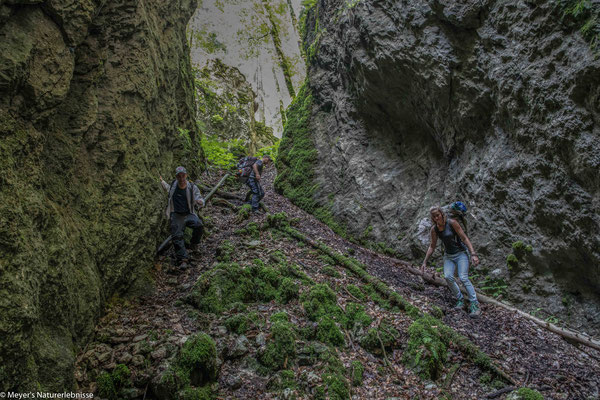 Die Waldschlucht von Cremines
