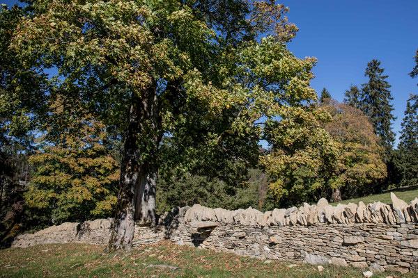 Renovierte historische Tockenmauer