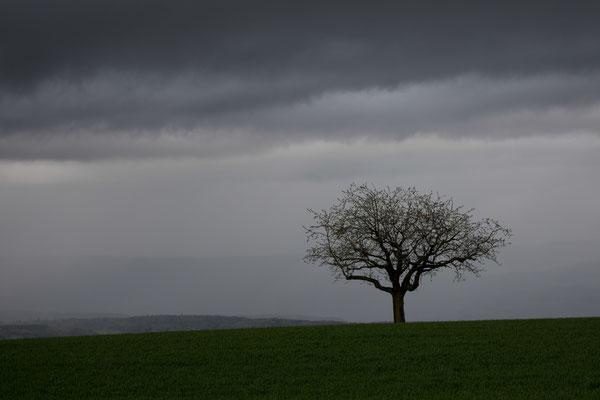 Regentag in Detligen