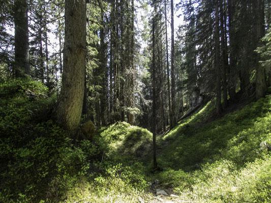 Märchenwald oberhalb Habkern