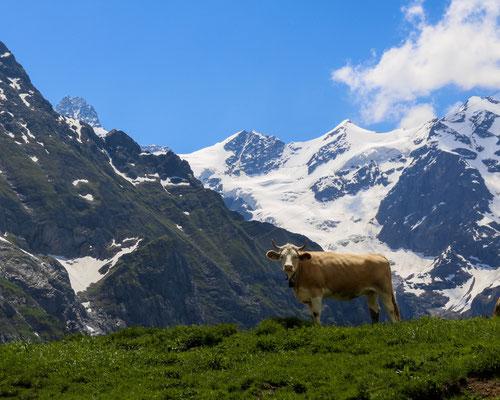 Auf der Alp Stepfihubel Oberhalb Grindelwald im Berner Oberland