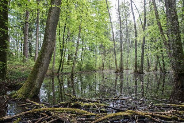 Der unbekannte Waldsee auf dem Weg nach Ferreyres