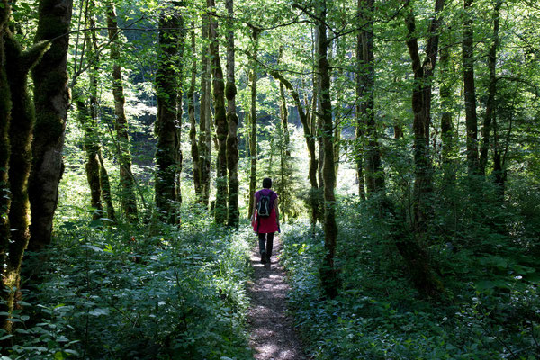 Wandern im Märchenwald