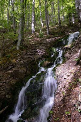 Ein paar Meter undterhalb der Quelle des Le Pichoux ist der Bach bereits sehr lebendig
