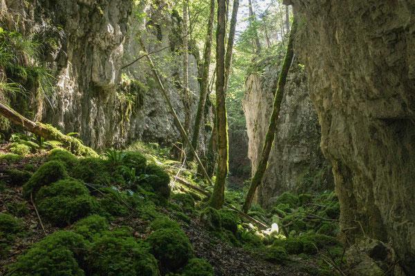 Durch diese wilde einsame Schlucht führt der Weg zur Eibe von Cremines