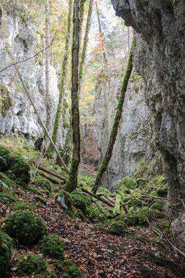 Naturparadies Waldschlucht Cremines