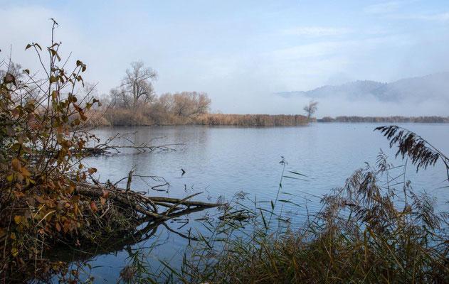 Der Niederriedsee