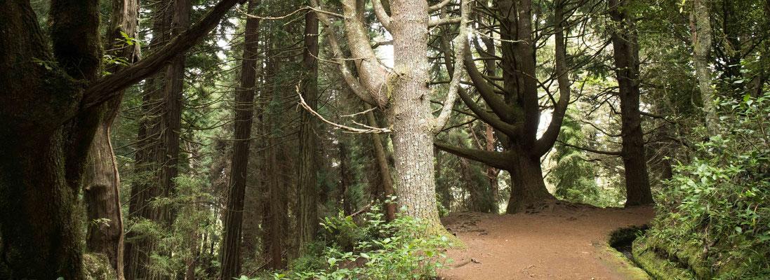 Parklandschaft in der Nähe von Queimadas entlang der Levada do Caldeirao Verde.