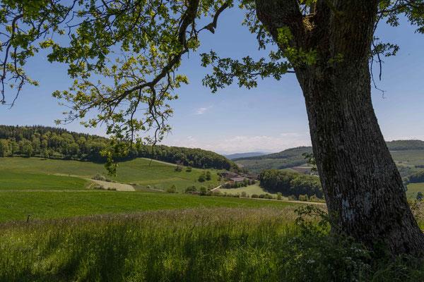 Bei Buechmatt mit Blick aufs Svhweizer Mittelland